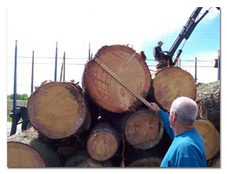 Hardwood and Softwood Logs and Lumber, Turner Forest Products